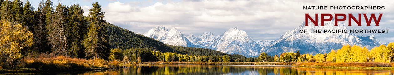 Nature Photographers of the Pacific Northwest