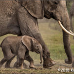 2nd Place Wildlife - Keeping Up With the Family by Katie Rupp