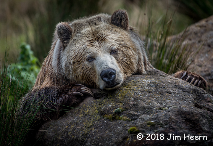 3rd Place Wildlife - Wanna Bear Hug? by Jim Heern