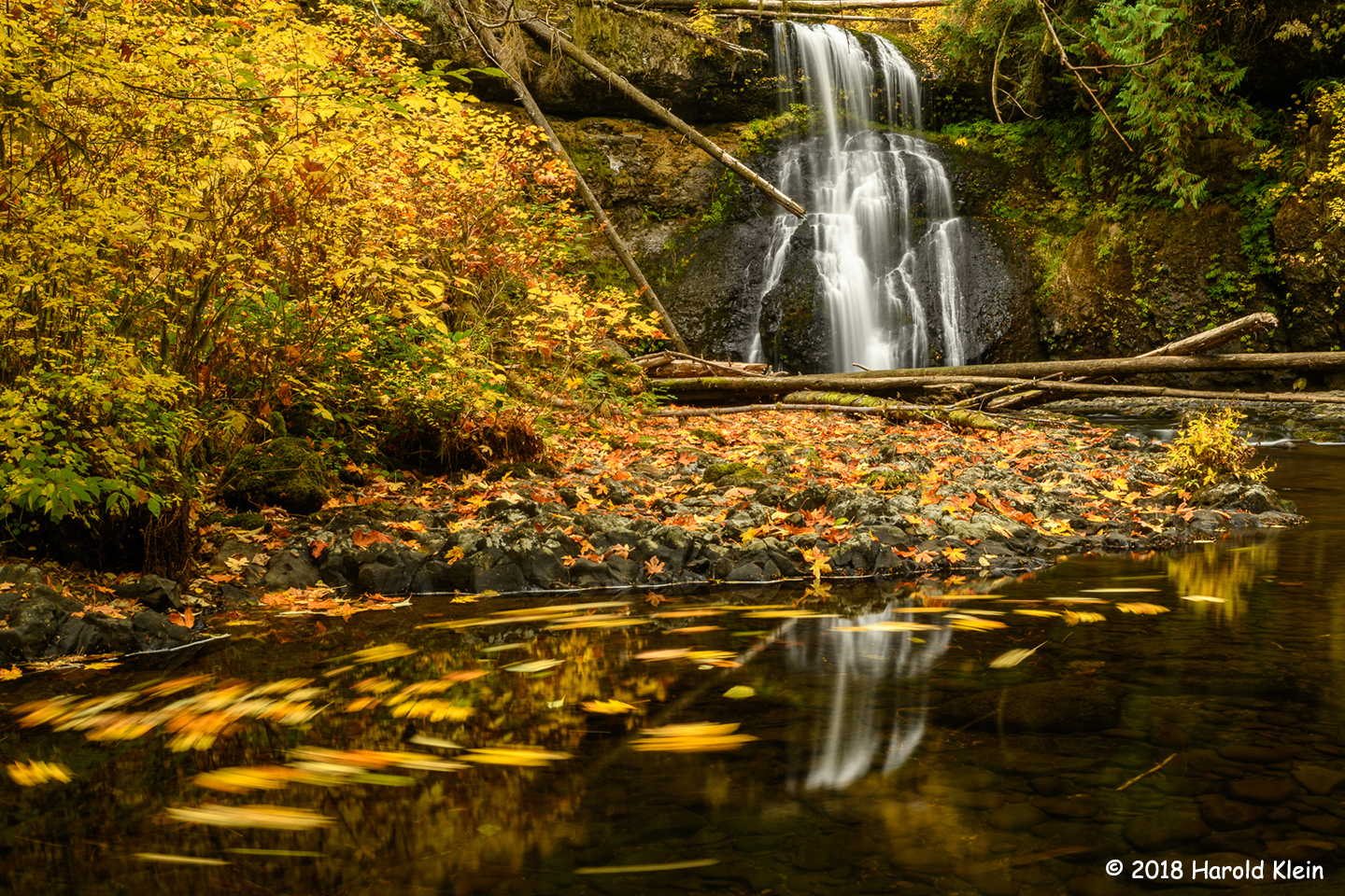 3rd Place Scenic - Silver Falls State Park by Harold Klein